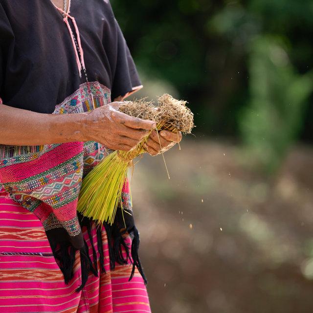 csm_farmers-are-planting-rice-in-the-farm-thailand-9DHZ42S_d9b4862124